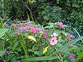 Flores no Parque Prado - panoramio - Paulo Humberto (1).jpg