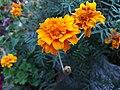 Flower456.jpg