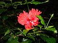 Flower - Flickr - deeps.adhi (1).jpg