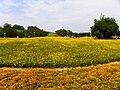 Flower Landscape in Yuanshan Park 20110425.jpg