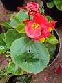 Flowers - Uncategorised Garden plants 65.JPG