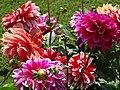 Flowers in Garden - Agra Fort - Agra - Uttar Pradesh - India - 01 (12612835453).jpg