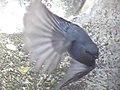 Flying (11301558865).jpg
