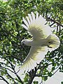 Flying (16573141060).jpg