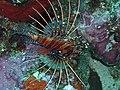 Fond marin - Nusa Penida2.jpg