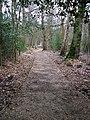 Footpath near Wildmoor Heath - geograph.org.uk - 1163493.jpg