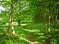 Footpath through Britton Wood - geograph.org.uk - 178531.jpg