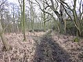 Footpath to Coombe Farm through Jubilee Covert - geograph.org.uk - 1719003.jpg