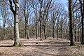 Forêt Départementale de Beauplan à Saint-Rémy-lès-Chevreuse le 14 mars 2018 - 13.jpg