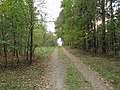 Forest-near-Zaberbecze-181007.jpg