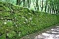 Forest @ Roc de Chère @ Talloires (35645794255).jpg