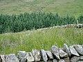 Forestry on Harthope Moor - geograph.org.uk - 495676.jpg