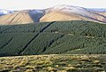 Forestry plantation on Glenrief Rig - geograph.org.uk - 303494.jpg