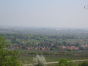 Forst an der Weinstraße - A view of Forst from across the vineyards to the west of the village