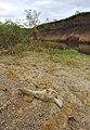 Fosiles oseos , especie bobina extinta hace 10 mil años, consultar Museo Serrano de la ciudad de Parana - panoramio.jpg