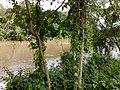 Foz do Rio Jundiaí no Rio Tietê em Salto - panoramio (2).jpg