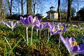 Frühling im Bad Mergentheimer Kurpark. 14.jpg