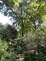 Freixe americà de l'antic jardí botànic P1250808.jpg