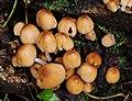 Fungus, Edenderry, Belfast (1) - geograph.org.uk - 1576025.jpg