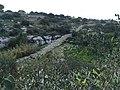 Għar Dalam Museum 36.jpg