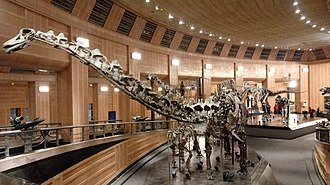 Galeamopus - G. pabsti skeleton in Cincinnati Museum Center at Union Terminal