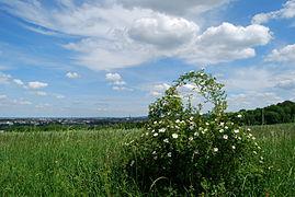 Gallberg - Aussicht auf Hildesheim 5.JPG