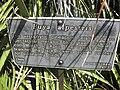 Gardenology.org-IMG 2411 hunt0903.jpg