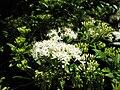 Gardenology.org-IMG 9443 rbgm10dec.jpg