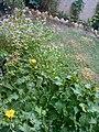 Gardens in Baghdad.jpg