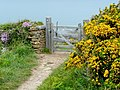 Gate on the South West Coast Path - geograph.org.uk - 1303805.jpg