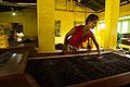 Gathered tea crops processing. Bogawantalawa Valley. Sri Lanka.jpg