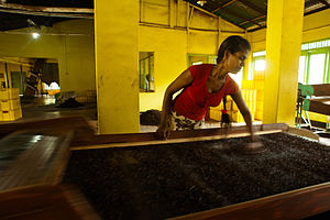 Gathered tea crops processing. Bogawantalawa Valley. Sri Lanka.jpg