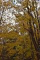Gatineau Park, October 2018 (06).jpg