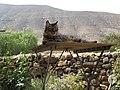 Gato sobre la mesa - panoramio.jpg