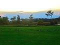 Geese in Warner Park - panoramio (13).jpg