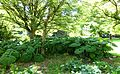 General view - VanDusen Botanical Garden - Vancouver, BC - DSC07356.jpg
