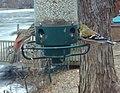 Goldfinch- Birdcam (4279393613).jpg
