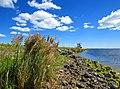 Golodova dambis Liepājas ezerā.jpg