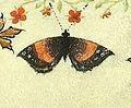 Grandes Heures du duc de Berry (BNF latin919) fol. 24r Papillon.jpg