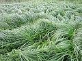 Grass near Upton wastewater station - IMG 0526.JPG