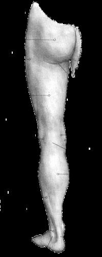 partes de la pierna derecha