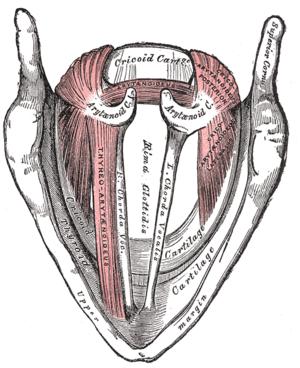 Thyroplasty types