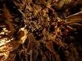 File:Great Stalacpipe Organ, Luray Caverns, Virginia (small).ogv