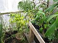 Greenhouse (15527219054).jpg