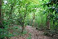 Gregg's Wood - geograph.org.uk - 1302510.jpg