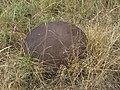 Gros Ouvrage de Molvange - Bloc 3 (21471656900).jpg
