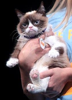 Grumpy Cat (14556024763) (cropped).jpg