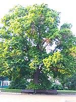 Gryshko Botanical Garden (May 2019) 11.jpg
