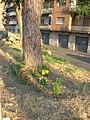 Guerrilla gardening in Pigneto (Rome).JPG