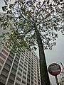 HK 油麻地 Yau Ma Tei 窩打老道 Waterloo Road Chinese YMCA Kln Centre facade Jan-2014 tree n bus stops sign.JPG
